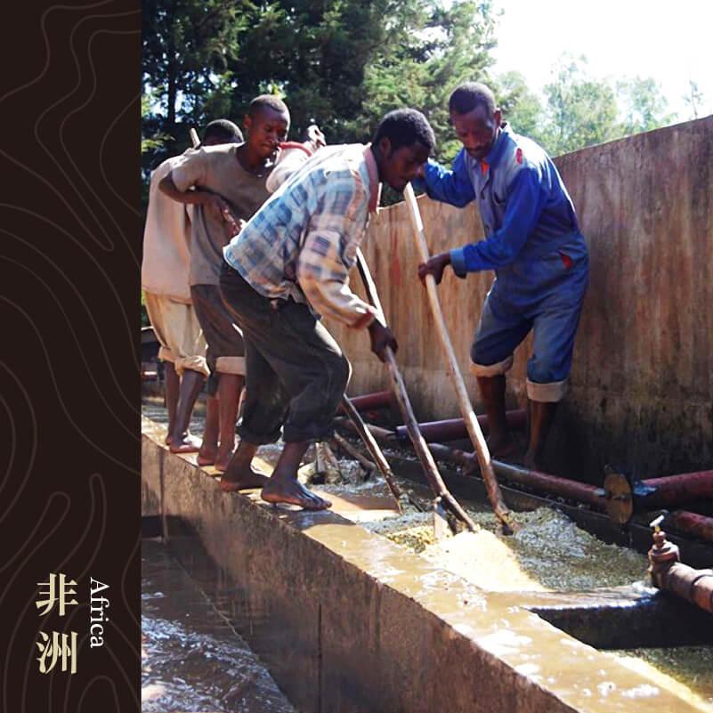 衣索比亞chelbesa 水洗