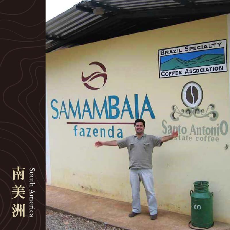 巴西 米納斯吉拉斯州 聖安東尼奧 杜安帕魯 蕨菜農園 日曬處理