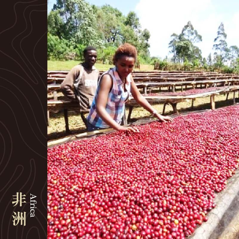 衣索比亞 錫達莫產區 谷吉 水洗處理 G1