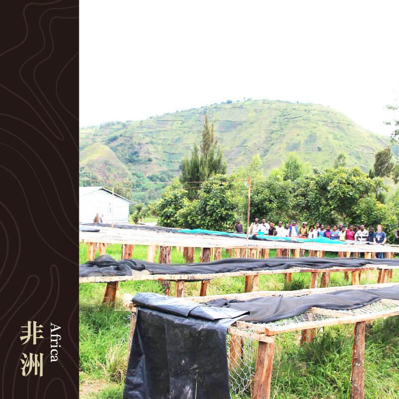 剛果 南基伏省 米諾瓦鎮 邁堤雅莊園 水洗處理 藍山&基伏波旁品種