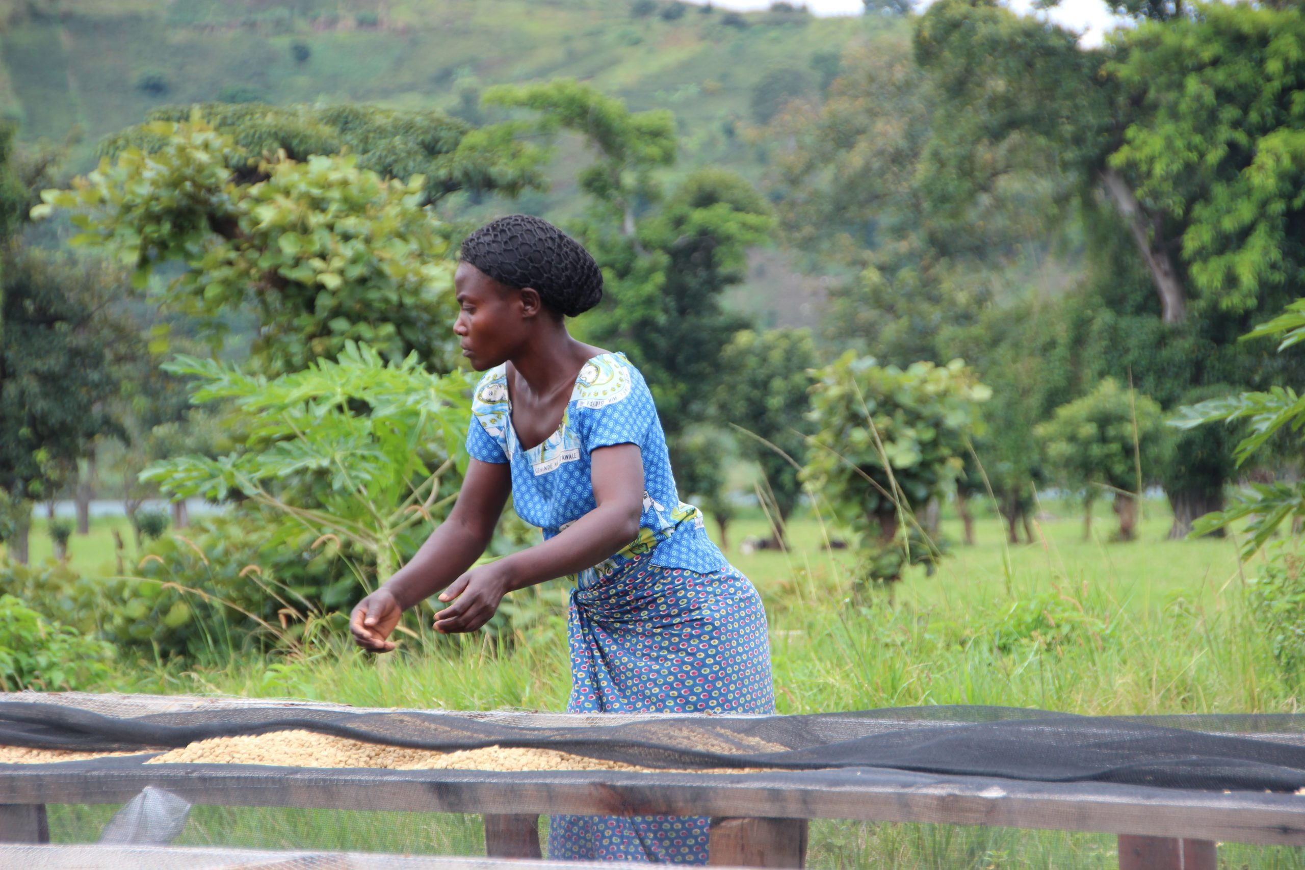 Congo Societe Maitea Minova South Kivu 2