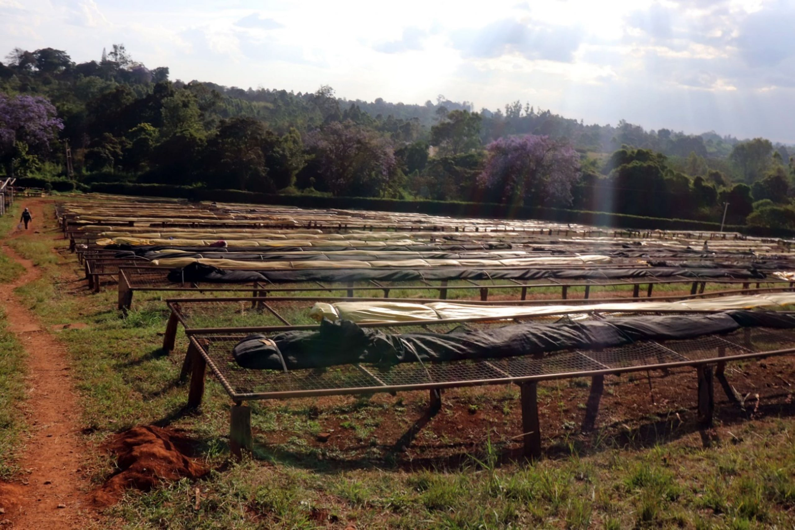 Kenya Drying Tables