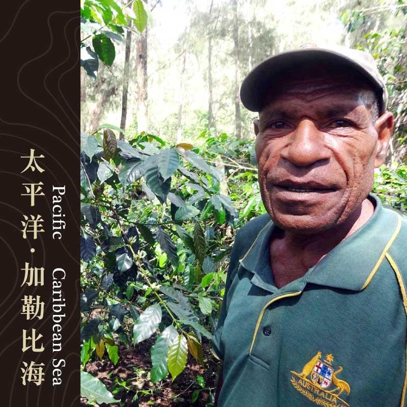 巴布亞新幾內亞 東部高地產區 維京山 小農 農場 蕾