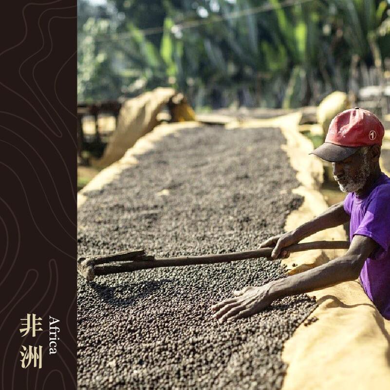 衣索比亞 古吉 罕貝拉 德里 日曬處理
