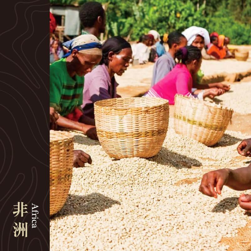 衣索比亞 耶加雪菲產區柯契爾合作社 沃卡處理廠 水洗處理 G1