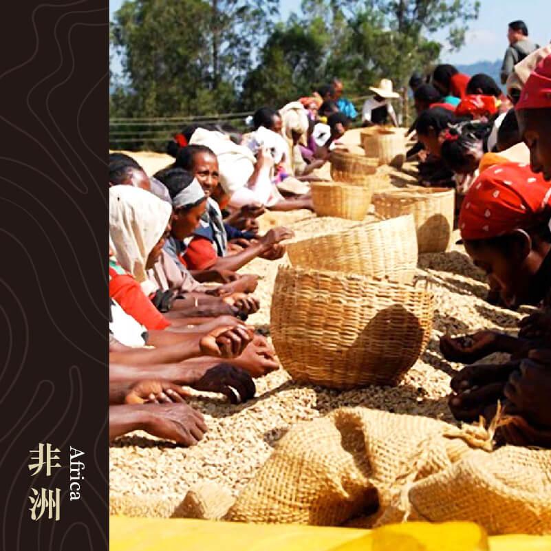 衣索比亞 耶加雪菲 荷芙莎 水洗處理