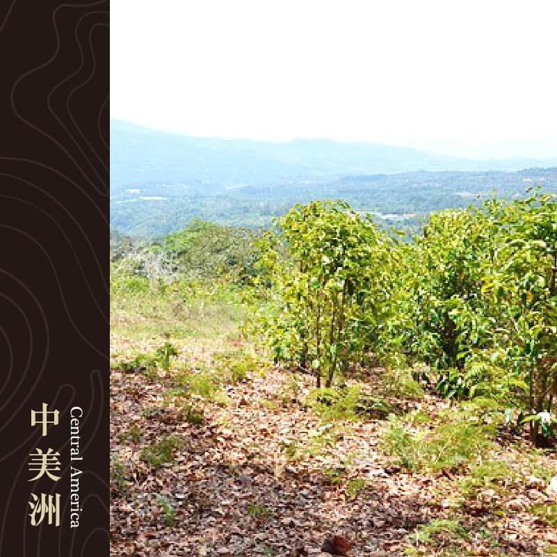 巴拿馬 伊萊達莊園 特別保留版 卡度艾品種 厭氧慢速乾燥