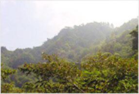 瓜地馬拉 阿蒂特蘭產區 阿吉蒲莊園 01
