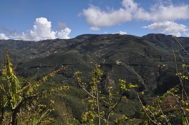 Costa Rica Tarrazú La Luna Farm Nautural Process Caturra