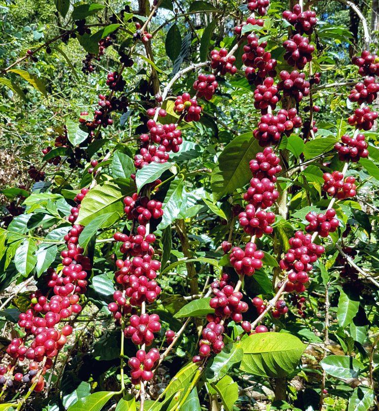 Frutos Rojos 768x833 1