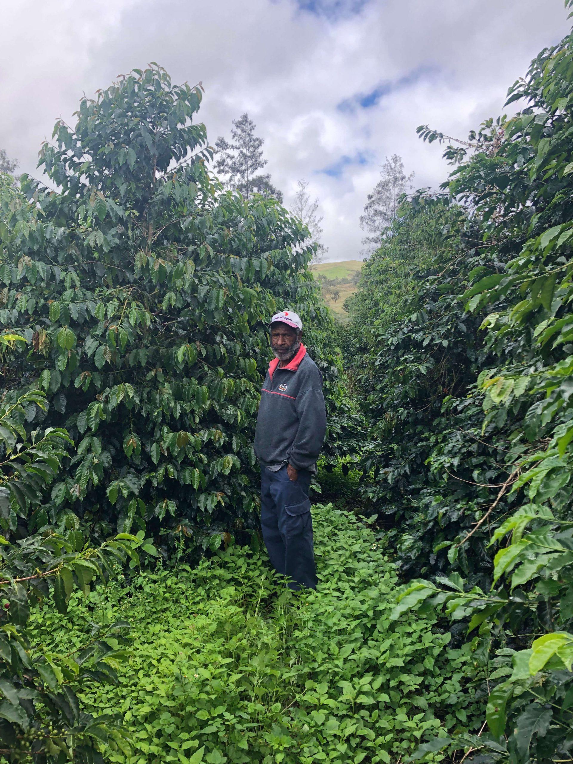 Png Tairora Trees 5 (1)