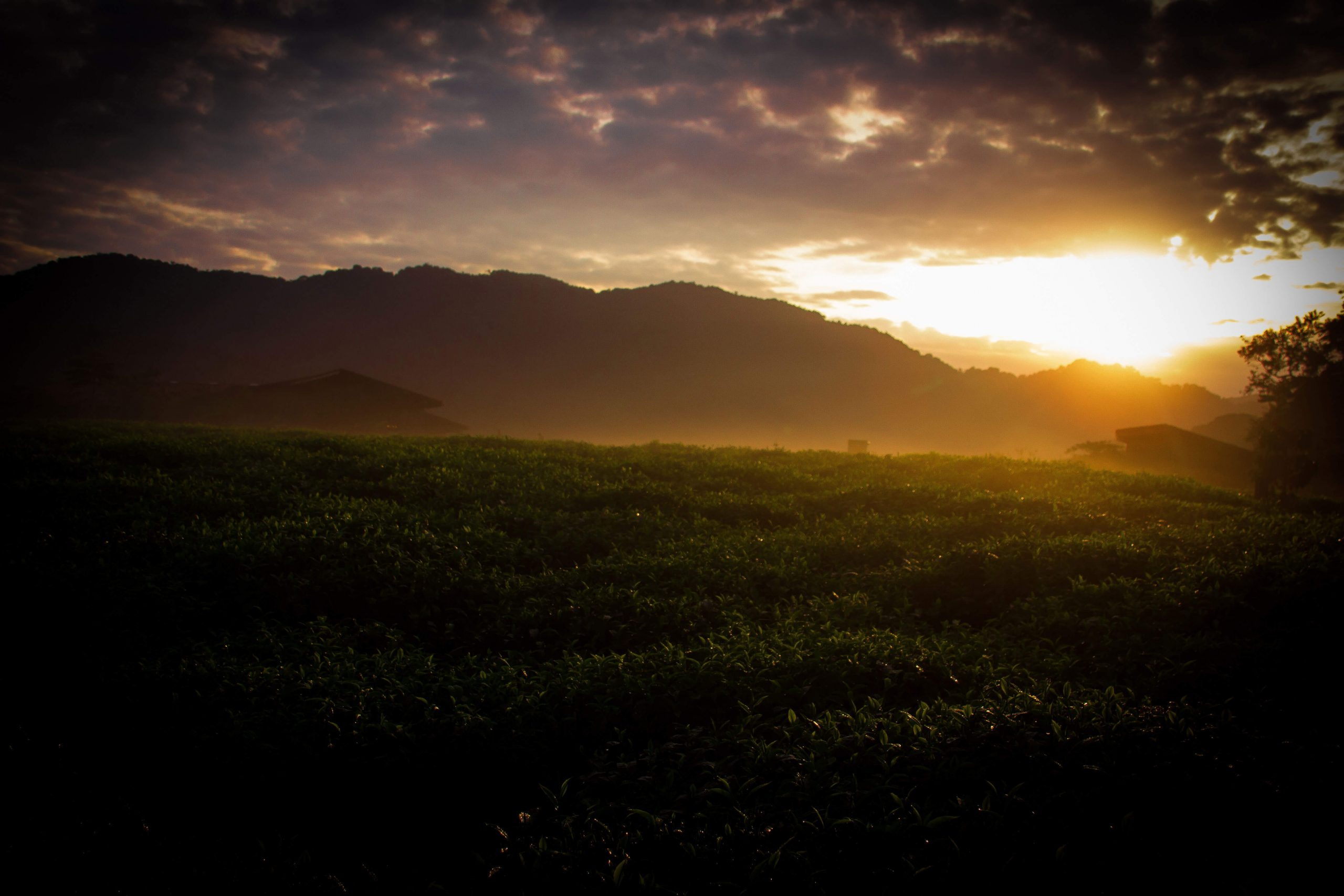 Rwanda Sunrise At Tea Plantation Nyungwe Forest Lodge 1